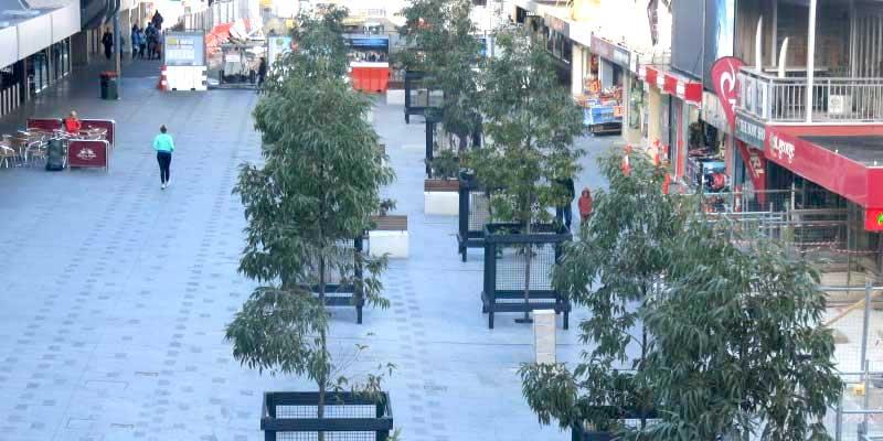 Trees In Urban Settings